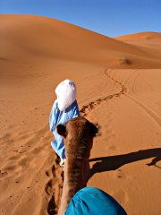 Berber guide leading a camel in the dunes of Erg Chebbi.
