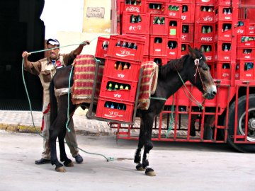 Fes mule transportation. It's the only way to get around.